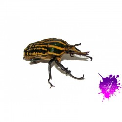 Ampoule Reptile Vision à...