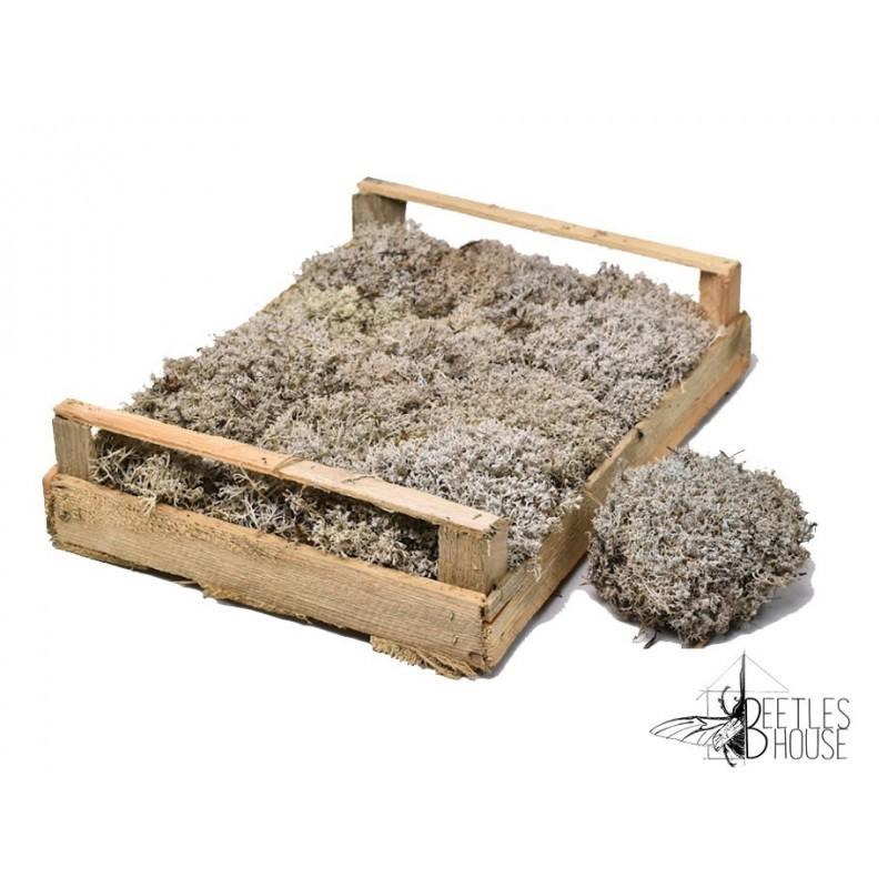 Lichen gris x 100 grammes
