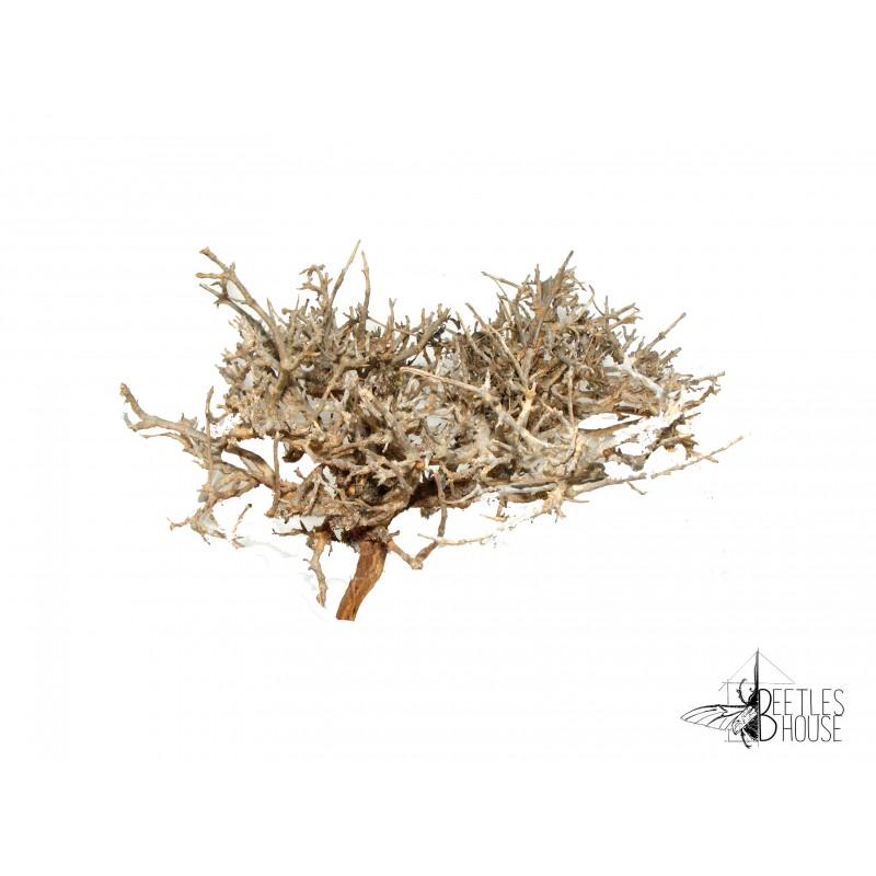 Branche décorative compacte ( 20 cm ) X 1